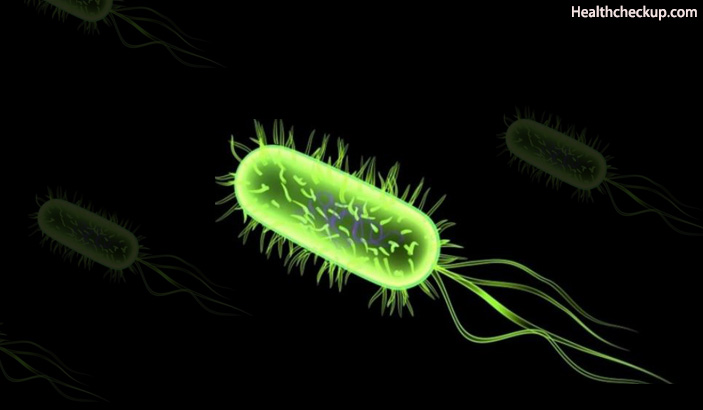 E.coli Bacteria - Urinary Tract Infection Cause