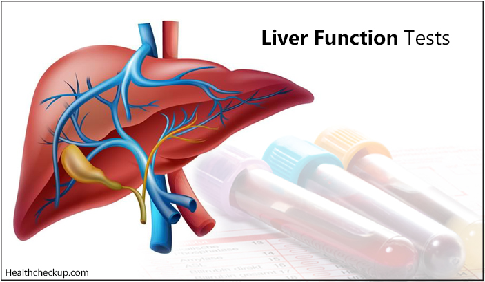 High Globulin in Liver Function Test – Causes And Remedies