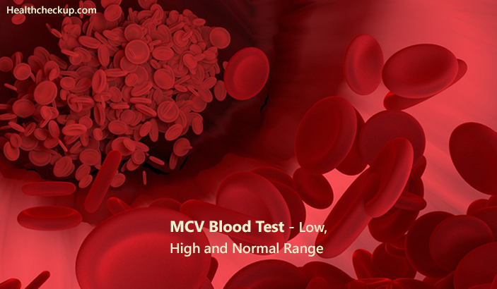 MCV Blood Test - Low, High and Normal Range